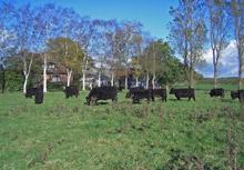 Galloway Zucht in Schleswig-Holstein
