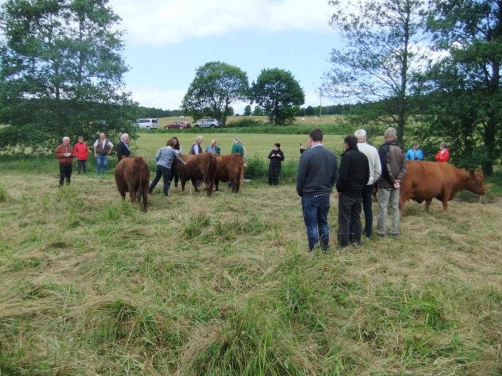 Die interessierten GIN Mitglieder in der roten Burgwald-Herde
