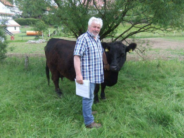 Horst Kraft mit einer Mutterkuh