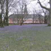 Schlosspark Husum / Krokusblüte